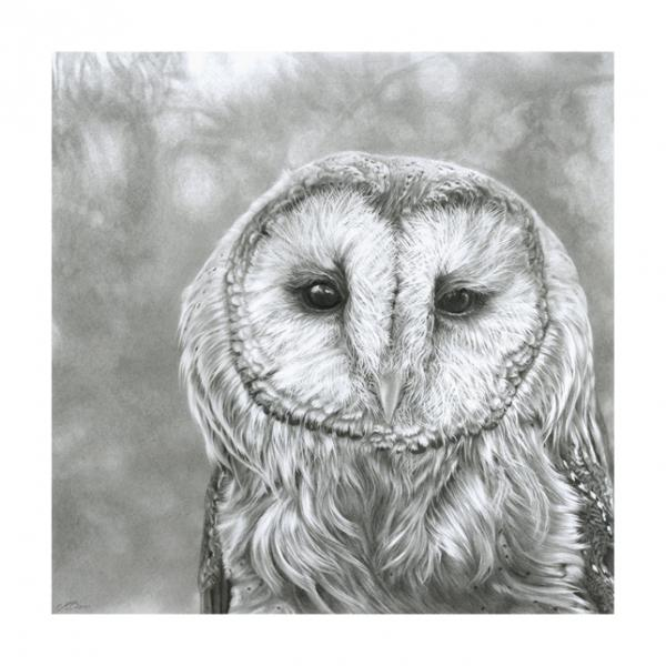 Barn Owl pencil drawing