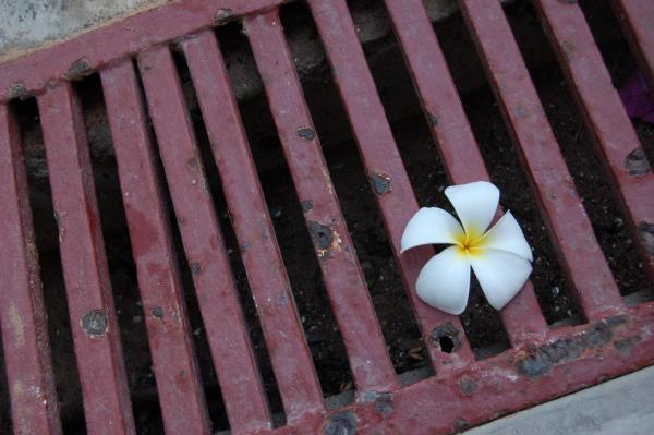 White flower on iron grating