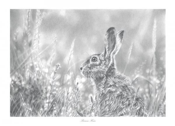 Brown Hare Drawing