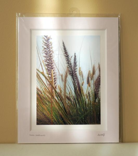 Grass Seedheads Print - Sarah Woolf Art and Photography