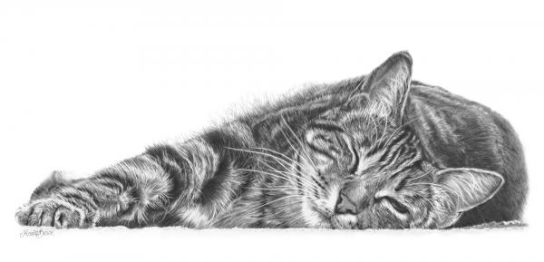 Tabby Cat Pencil Drawing