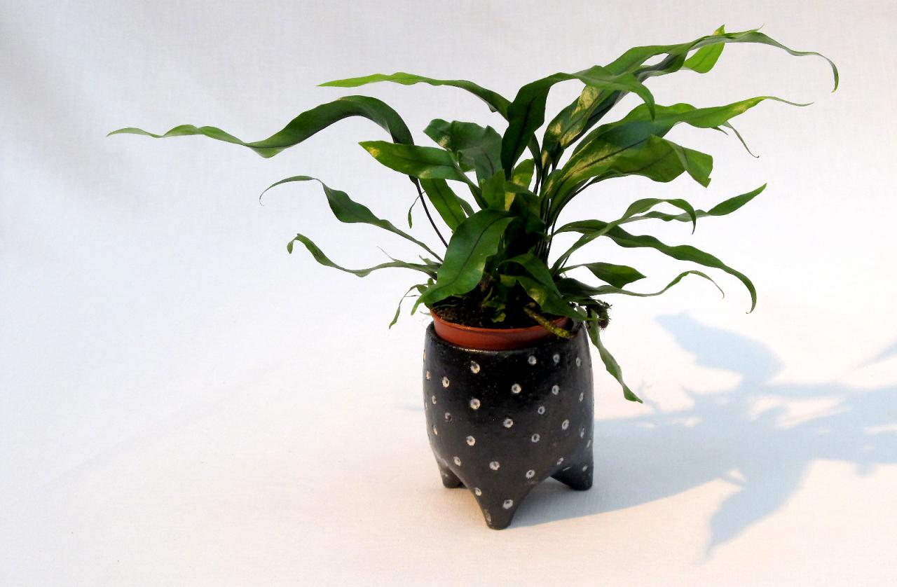 sm planter with plant blue/black white spots